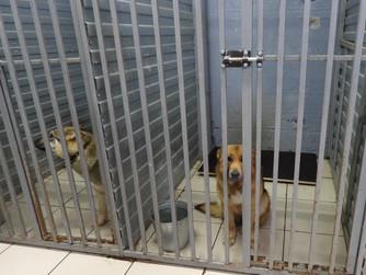 На депутатском контроле: судьба бродячих собак