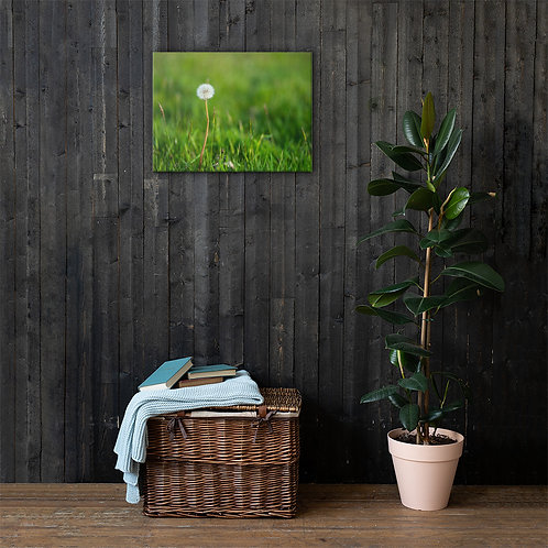 Taraxacum Canvas