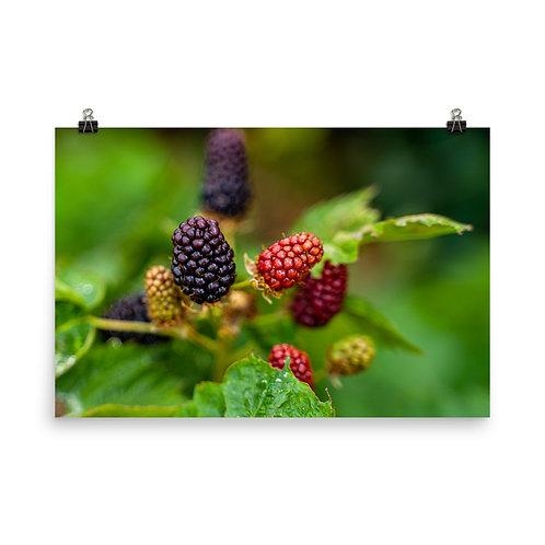 Bokeh Blackberries Poster
