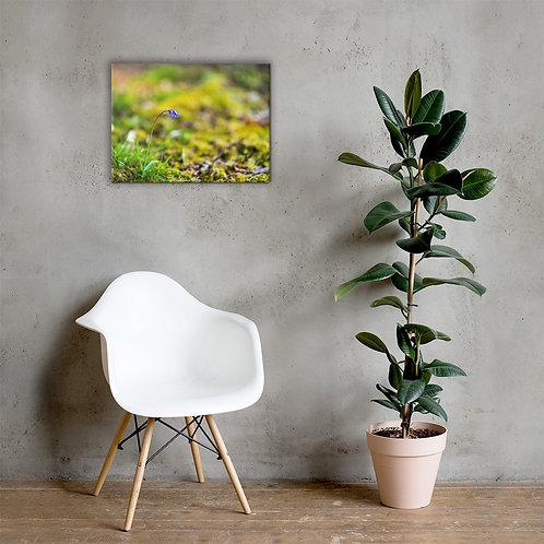 Flor Canvas