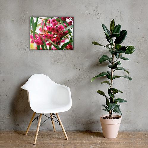 Callistemon Canvas