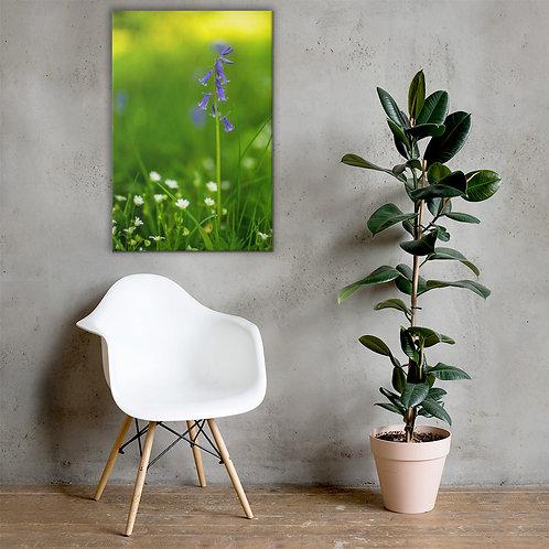 Bokeh Bluebell Canvas
