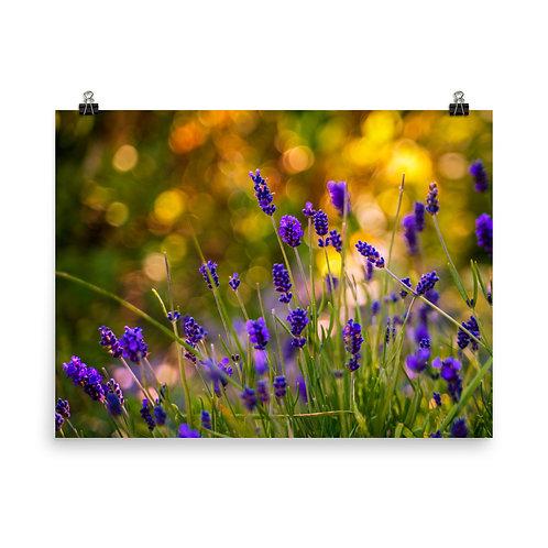 Bokeh Lavender Poster