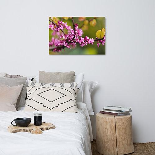 Sakura Canvas