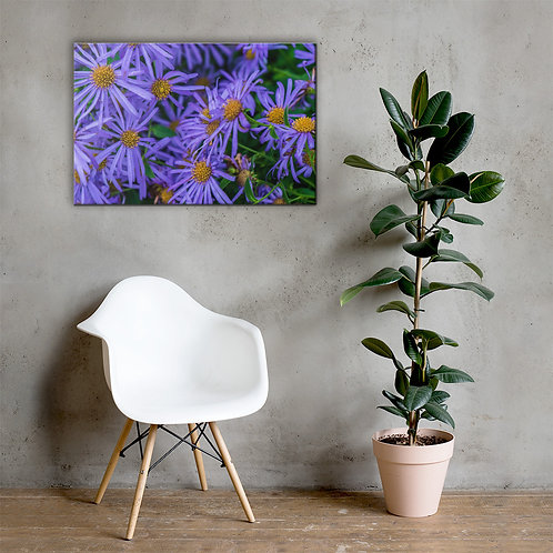 Aster Canvas