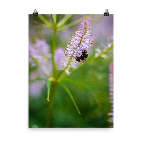 Mr Pollinator Poster