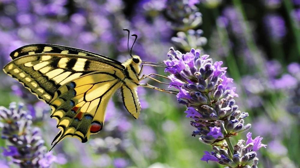 mariposa amarilla colores naturaleza flores psicología del color