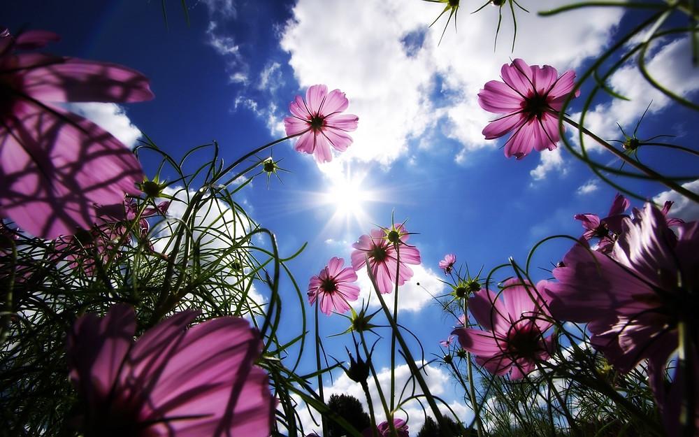 Flores acentos de color psicologia del color