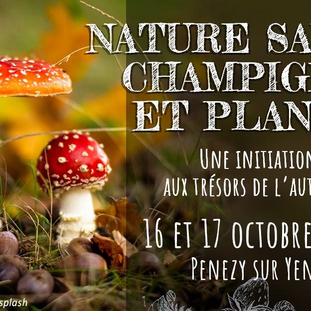 Nature sauvage champignons et plantes