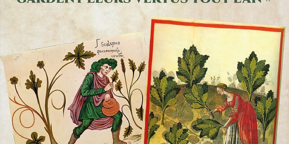 Les plantes de la St-Jean (Solstice d'été )