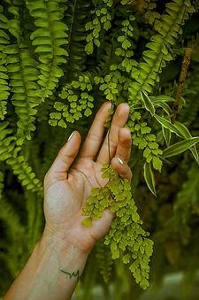 plante0002.jpg