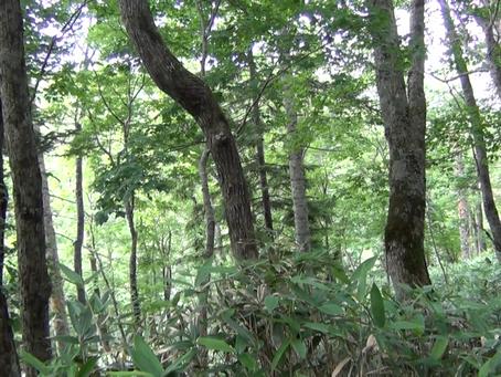 音の原点に立ち返る @北海道中川町有林&北大研究林