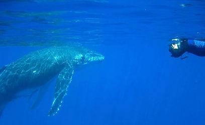 humpback snorkel.jpg
