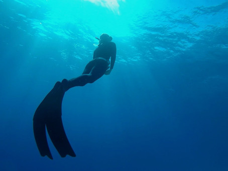 Humans vs Marine Mammals - what do we have in common?