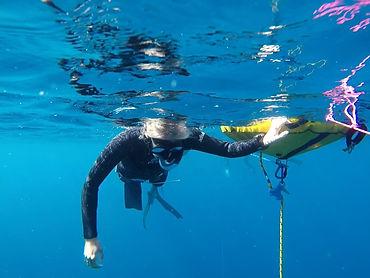 freediving fridykning gofreedive denmark danmark padi aida courses kursus freedive copenhagen københavn fridykker fridyk