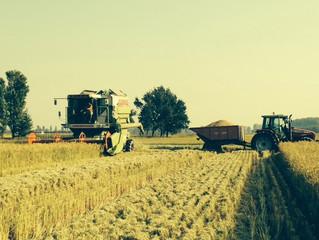 Abbiamo iniziato la raccolta del riso!