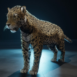 JAGUAR CATWALK