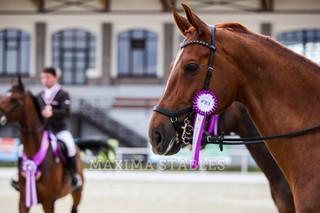 Ищем лошадей на финалы Кубка MAXIMA PARK по конкуру и выездке!