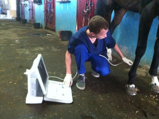 Мобильный конный госпиталь в Нальчике.