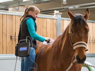 Вопросы ветеринарии на первой в новой России ярмарке лошадей.