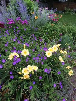 Rozanne geranium & Daylily