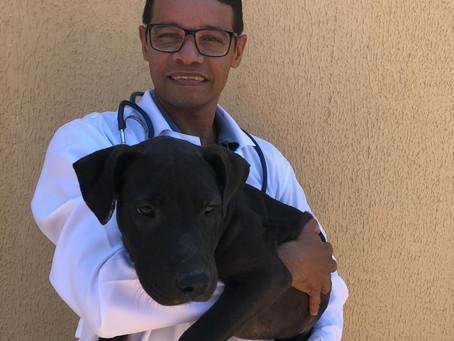 Veterinário especifica cuidados com cães e gatos durante a pandemia