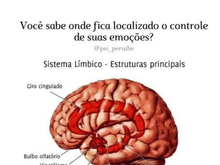 O Sistema Límbico (SL) e o processamento das nossas emoções