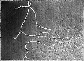 1-Horse-2003.jpg