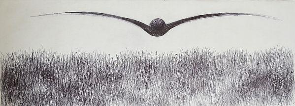 bird-soaring-13ps.jpg