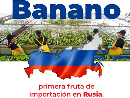 Banano: Primera fruta de importación en Rusia.
