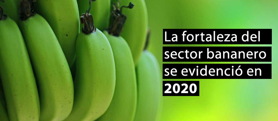 La fortaleza del sector bananero se evidenció en 2020