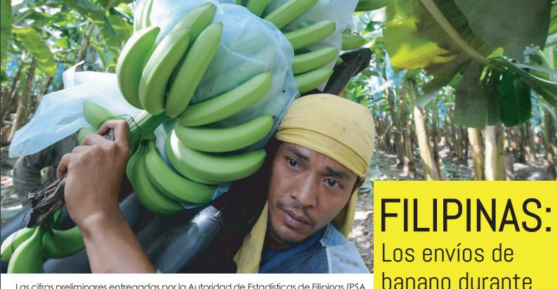 Filipinas: Los envíos de banano durante el 2020 se redujeron 18,35%.