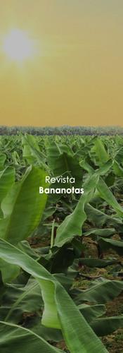 Revista Bananotas
