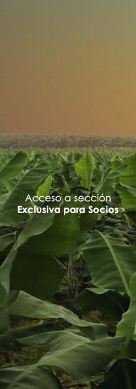 Acceso a Area Exclusiva de Socios