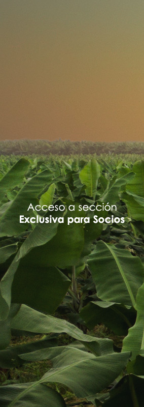 Acceso a Area Exclusiva de Socios