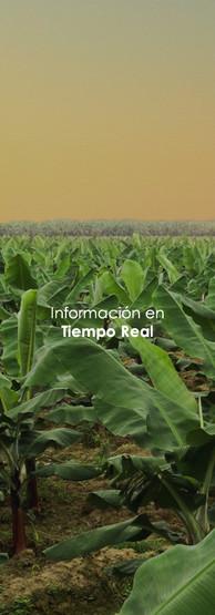 Información en Tiempo Real