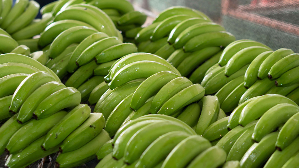 Banano Verde.jpg