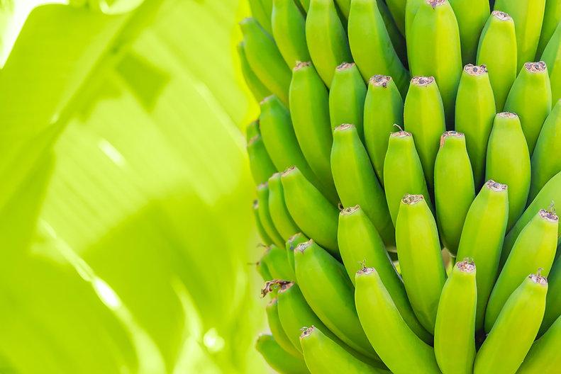 grenn-bananas-palm-cultivation-fruits-te