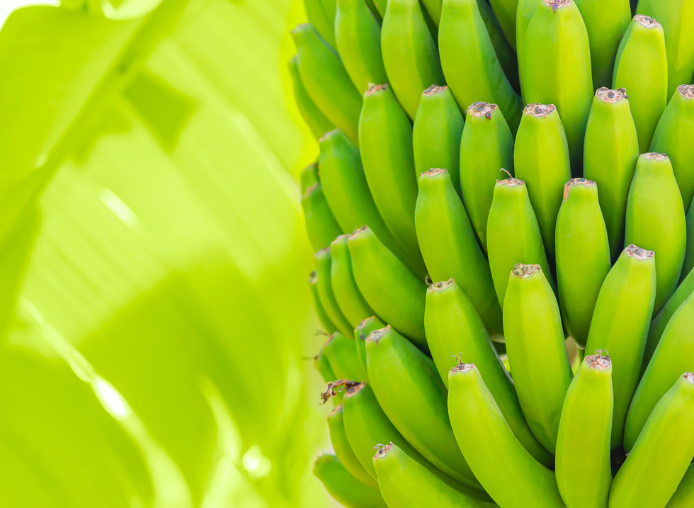 Clúster Bananero del Ecuador