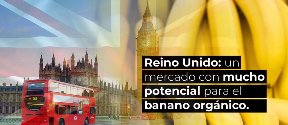 Reino Unido: un mercado con mucho potencial para el banano orgánico.