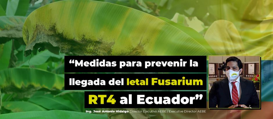 """Medidas para prevenir la llegada del letal FusariumRT4 al Ecuador"""