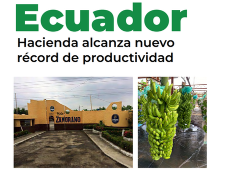 ECUADOR: Hacienda alcanza nuevo récord de productividad.