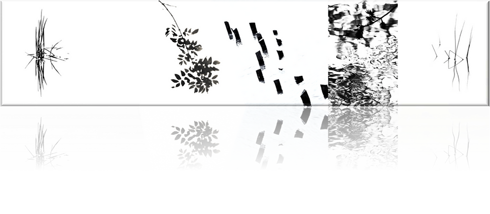 graphic line portfolio