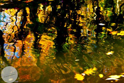 Reflections-9.jpg