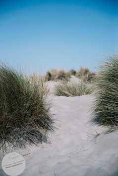 Dune-7.jpg