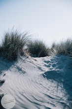 Dune-4.jpg