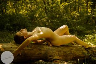 Summer Forest-23.jpg
