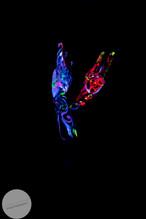 Scarry_Lights-23.jpg