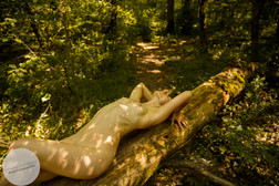 Summer Forest-25.jpg