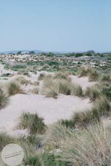 Dune-11.jpg